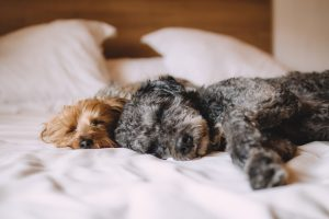 Alojamiento Pet Friendly mascotas